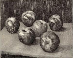 Sundowner Apples I