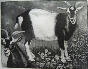 Pied goat