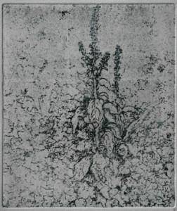 Plant Form- Seeding Foxgloves