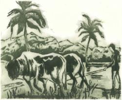 Farming in Cuba